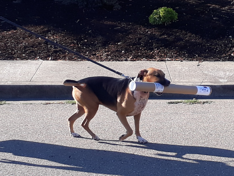 dog with big cardboard tube